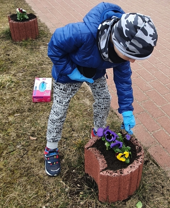 Na pierwszym planie chłopiec sadzi  bratki w kolorze fioletowym i żółtym.