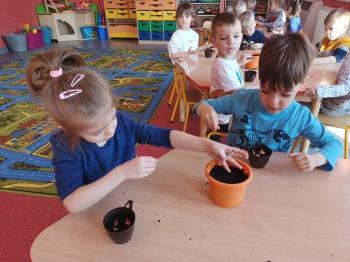 Dzieci z grupy IV założyły w sali zielony kącik